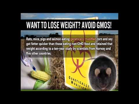 GMO foods and it's effects on the body