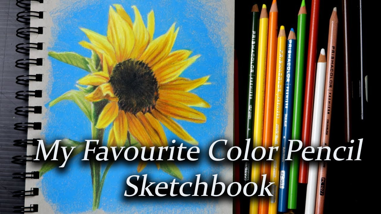 Color Pencil Sketching Sunflower Study Using Prismacolors In My Strathmore Toned Grey Youtube