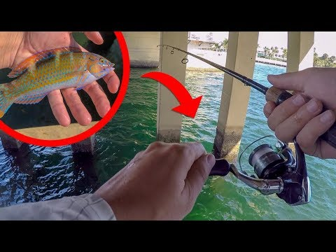 Fishing For TROPICAL Aquarium PET FISH!!