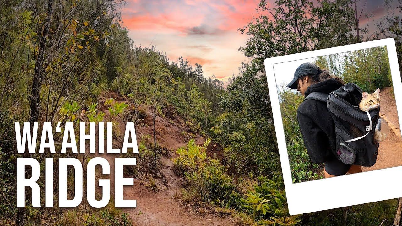 Adventures at Wa'ahila Ridge State Rec Area! PART 1 | Hawaii Hikes