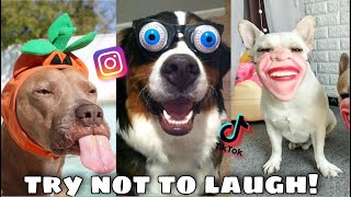 FUNNY AND CUTE DOG COMPILATION  TRY NOT TO LAUGH CHALLENGE  TikTok & Instagram