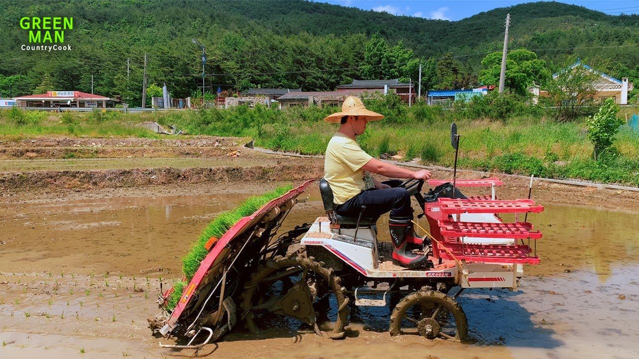 그린맨의 브이로그 모내기 Feat,농기계 뽀개기 // Greenman Vlog - Learn how to farm for the first time ㅣ강릉ㅣGangneungㅣ바다