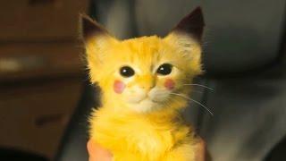 Smieszne Zwierzaki/Zwierzeta [Psy i Koty] - Kompilacja Smiesznych Filmikow 2016