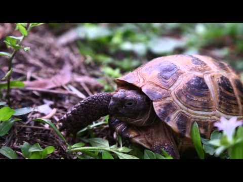 Best Russian Tortoise Advice : Kamp Kenan S3 Episode 15