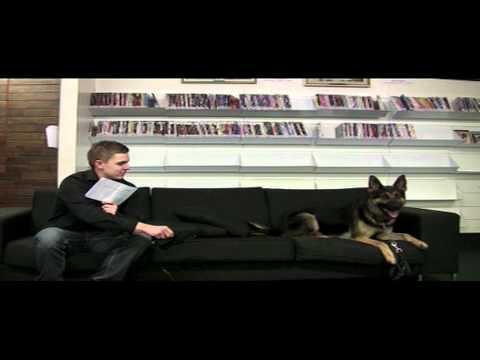 How do you become a police dog?