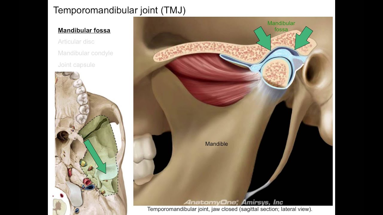 Infratemporal fossa - YouTube