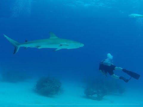 Bahamas Shark Diving   UNEXSO CRISTINA ZENATO   Freeport