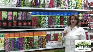 Обзор растений в декоративной упаковке