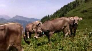 Swiss Alps hiking trip