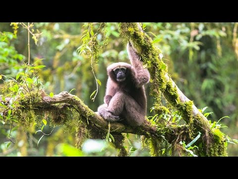 Scientists discover new primate species!