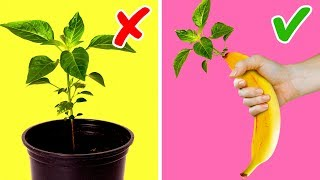 20 UNBELIEVABLE PLANT LIFE HACKS YOU SHOULD TRY AT LEAST ONCE