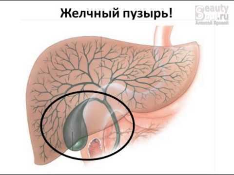 Как желчь попадает в желчный пузырь из печени