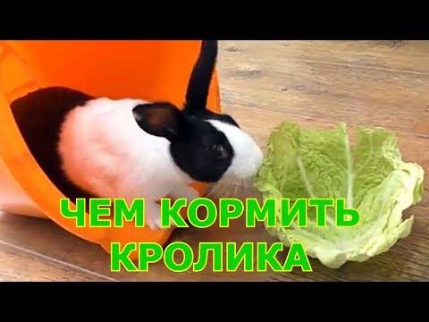 Декоративные кролики - чем кормить | уход и содержание