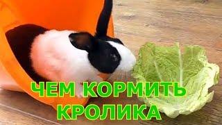 Декоративные кролики - чем кормить   уход и содержание