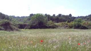 Sonidos del campo en primavera