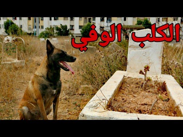 الجزء الثاني : قصة الوفاء التي أبكت العالم (الكلب الوفي) .😢💔.