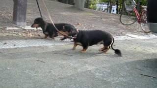 モモとタクです。カメラから逃亡中?! http://www.wanlove.jp/