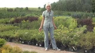 Размножение растений. Сад мечты. Выпуск 9