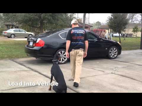 Doberman 'Jax' Amazing Obedience | Owner Testimonial | Baton Rouge Dog Trainers