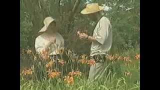 видео Травник. Лечение бессоницы лекарственными травами.