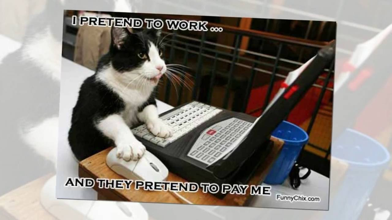Image result for cat at desk meme