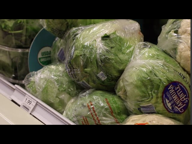 A New Lettuce Eating Club is Growing on Campus | SGTV News 4