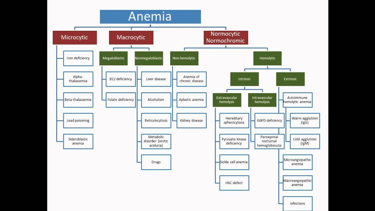 Anemia - Usmle Step 2 Review