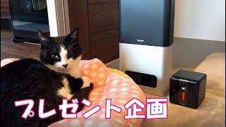 【プレゼント企画】おるすばん見守りカメラPetcubeを使ってみた! thumbnail