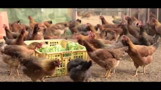 カシオペアプレミアム「二戸地鶏」