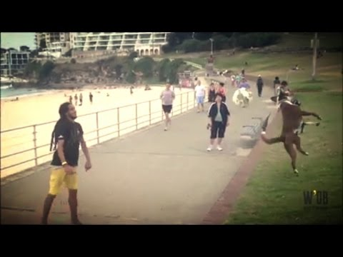Brazilian dog plays soccer at Bondi Beach | What's On Bondi