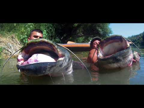 CATFISHING BIG CAT BIG ONE| 2017