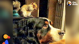 Rescued Squirrel Loves Dog Brother | The Dodo Odd Couples