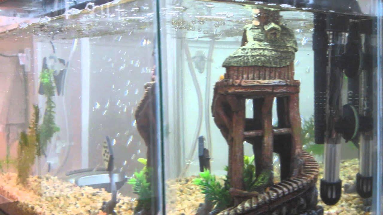 20140916 top fin 10 gallon aquarium starter kit review for 50 gallon fish tank starter kit