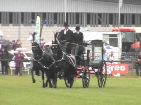 Friesian horses to a black hearse at Bakewell Show