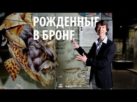 РОЖДЕННЫЕ В БРОНЕ. Эволюция рыб 2. Ярослав Попов | Палеонтологические истории #010