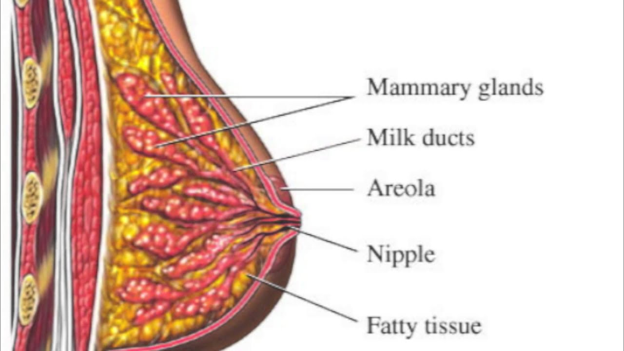How Things Work -- Breast Implants - YouTube