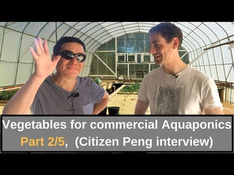 Vegetables for commercial Aquaponics Part 2, Citizen Peng interview