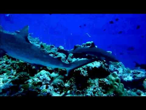 Diving in Palau May 2017