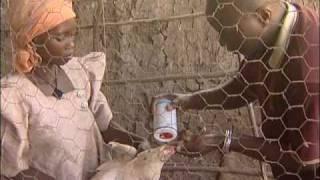 FARM-Africa - Increasing chicken production in Uganda