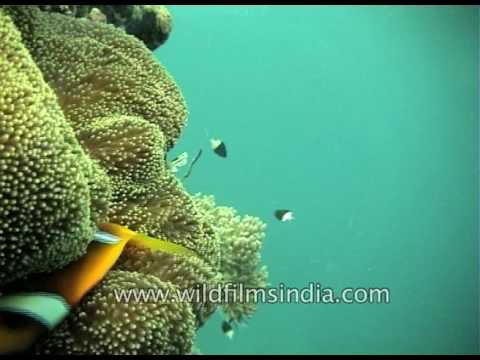 Explore the marine life of Indian Ocean