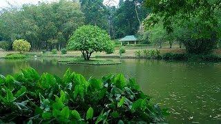 Royal Botanical Garden Peradeniya | GoPlaces Sri Lanka