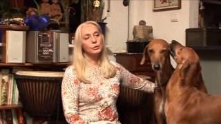 TierTV Klasse Rasse im Portrait : Der Azawakh (Rechte bei TierTV )