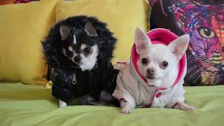 Pet Life Fall Outerwear Collections