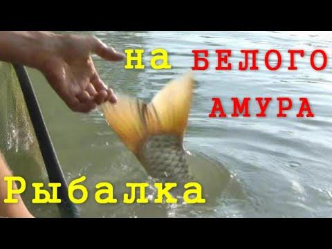 Ловля белого амура. Моя рыбалка №2. Август 2018.