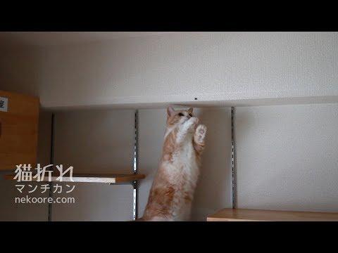 蜘蛛、逃走中-spider escapes from a cat