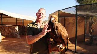 Eagle and his trainer