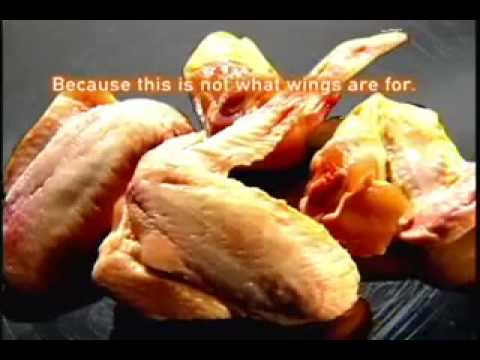 15+ Reasons to Quit Eating Meat & Be a Vegetarian ~ MUST SEE from YouTube · Duration:  3 minutes 41 seconds