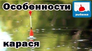 что делать если нет клева на рыбалке