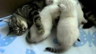 котята хотят кушать