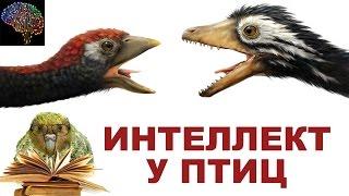 видео Птицы произошли от динозавров
